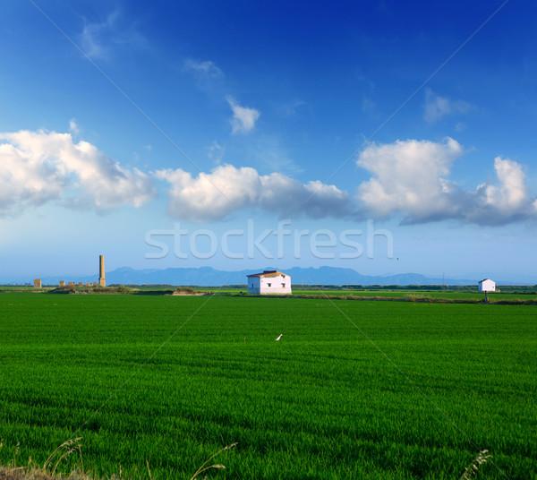 Zöld rizs mezők Valencia Spanyolország napos Stock fotó © lunamarina