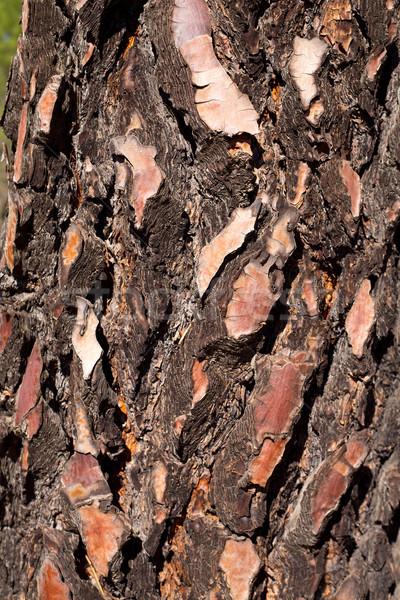 Сток-фото: черный · соснового · текстуры · подробность · макроса · дерево