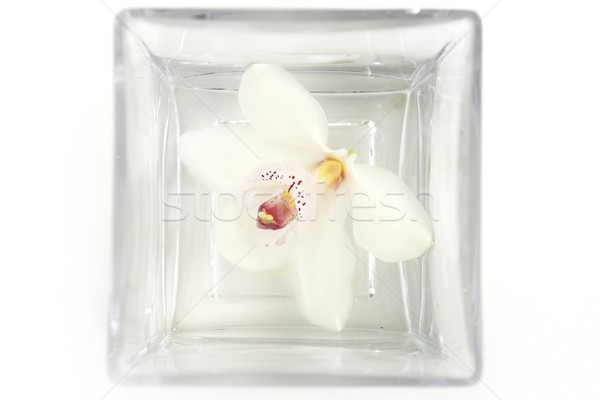 orchid white flower in square water glass Stock photo © lunamarina