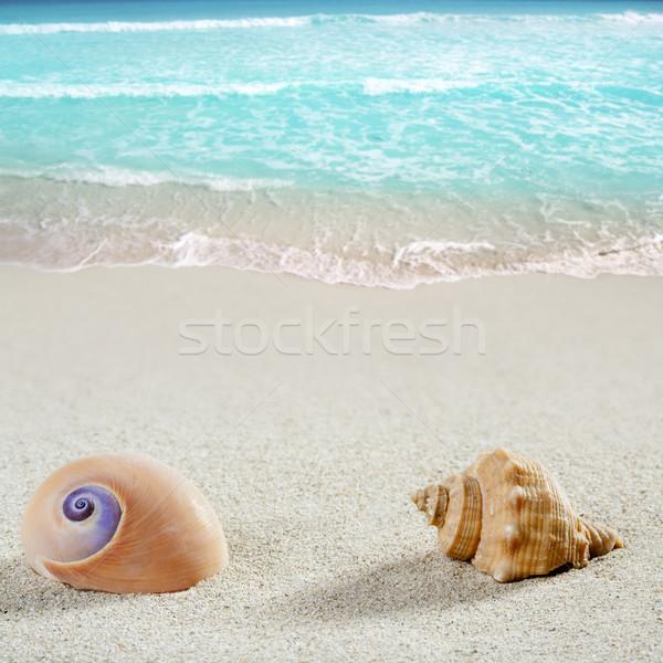 beach sea snail shell tropical white sand closeup Stock photo © lunamarina