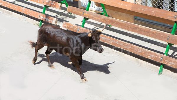Esecuzione strada Spagna toro tradizionale mucca Foto d'archivio © lunamarina