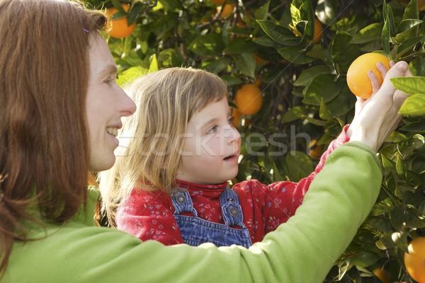 Anya mutat lánygyermek narancsfa aratás kislány Stock fotó © lunamarina