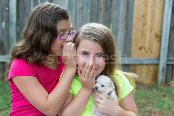 kid girls playing with puppy pet chihuahua Stock photo © lunamarina