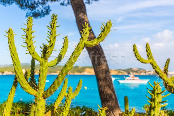 Majorca Cala Fornells beach Paguera Peguera Stock photo © lunamarina