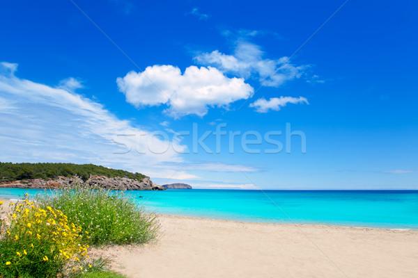 Cala Nova beach in Ibiza island with turquoise water Stock photo © lunamarina