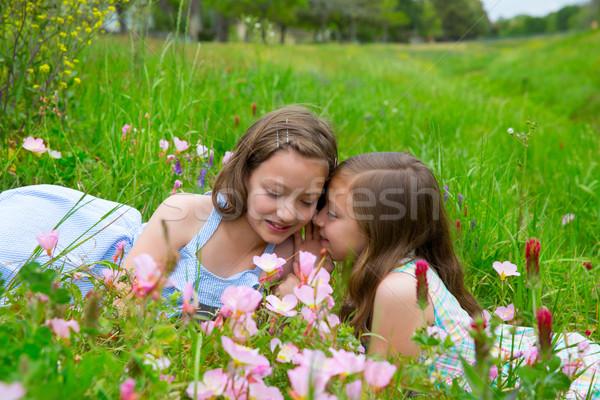 twin sisters whispering ear on spring flowers meadow Stock photo © lunamarina