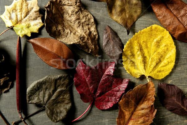 Stockfoto: Donkere · hout · vallen · afbeelding · klassiek