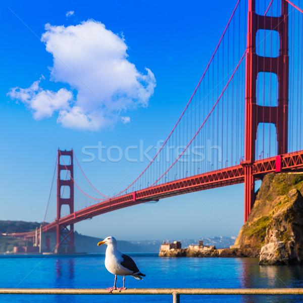 San Francisco Golden Gate Bridge gaivota Califórnia EUA azul Foto stock © lunamarina