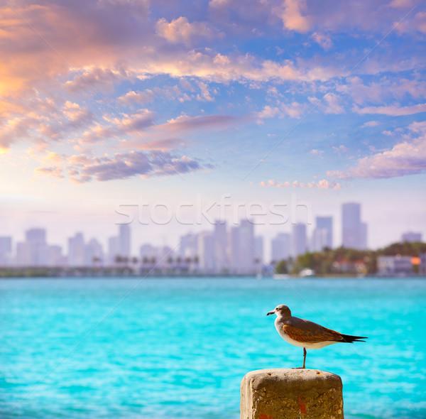 Miami belváros ködös sziluett tengerpart sirály Stock fotó © lunamarina