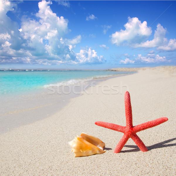 Zdjęcia stock: Plaży · Rozgwiazda · biały · piasek · niebo · wody