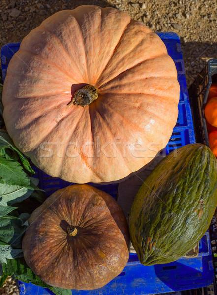Melon and Pumpkin in autumn fall at market Stock photo © lunamarina