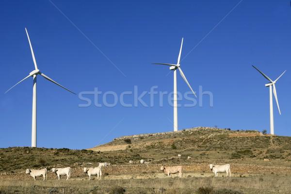Foto stock: Vaca · gado · elétrico · blue · sky · montanha · industrial