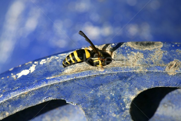 Vespa bug giallo giacca blu metal Foto d'archivio © lunamarina