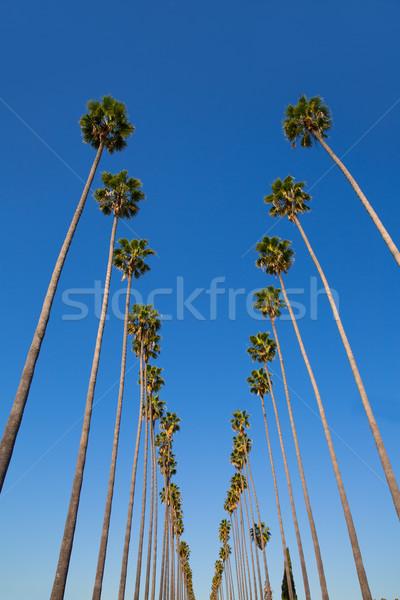 Los Angeles palmiye ağaçları tipik Kaliforniya Stok fotoğraf © lunamarina