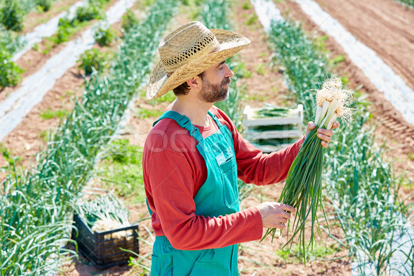 Farmer man harvesting onions in Mediterranean Stock photo © lunamarina