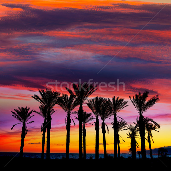 Almeria Cabo de Gata sunset pam trees Retamar Stock photo © lunamarina