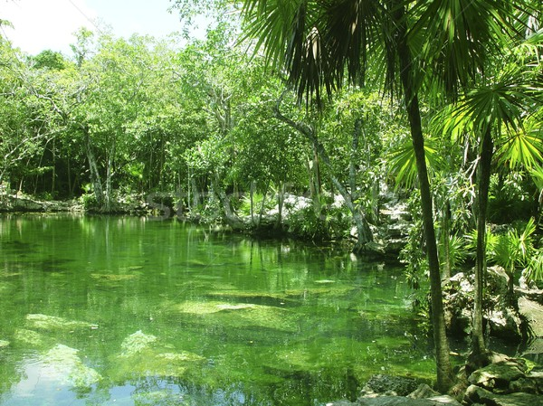 cenote Riviera Maya jungle mayan Quintana Roo Stock photo © lunamarina