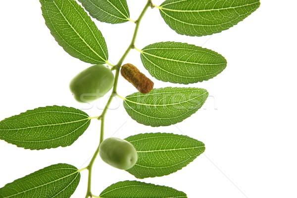 Levelek átláthatóság zöld gyümölcsök hát fény Stock fotó © lunamarina