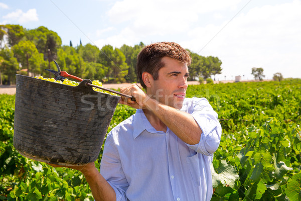 chardonnay harvesting with harvester farmer winemaker Stock photo © lunamarina