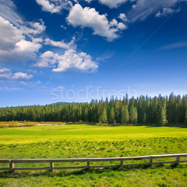 Yosemite lasu California zielone słoneczny Zdjęcia stock © lunamarina