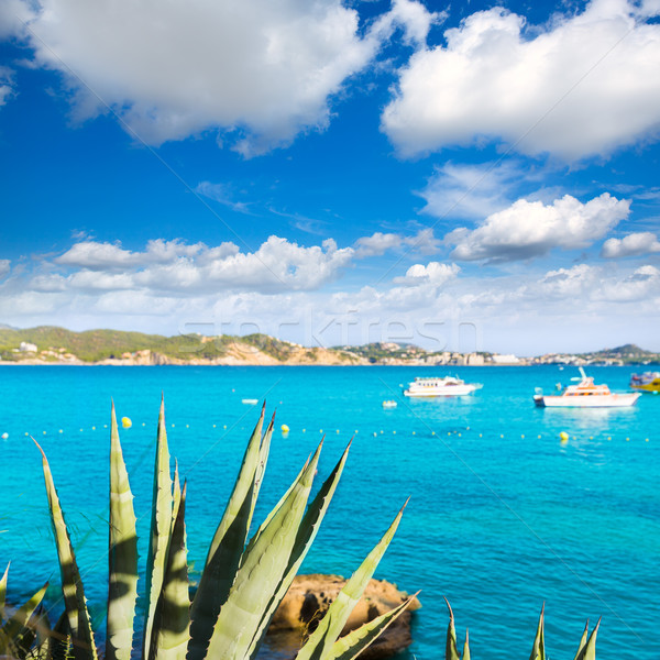 Foto stock: Praia · mallorca · ilha · Espanha · paisagem · mar