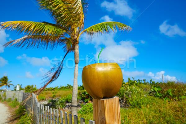 Miami dél tengerpart kókusz Florida ital Stock fotó © lunamarina
