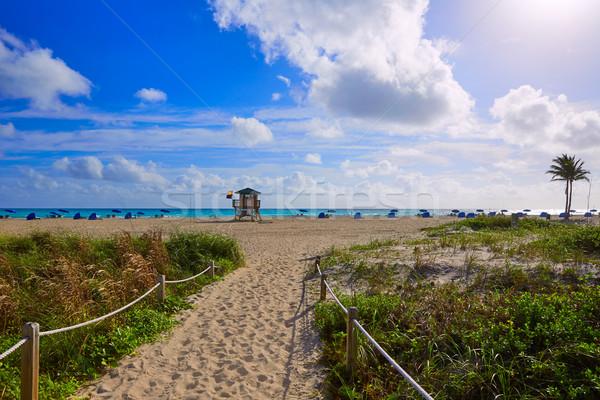 Zanger eiland strand palm Florida USA Stockfoto © lunamarina