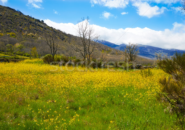 La maneira ponta flores primavera montanha Foto stock © lunamarina