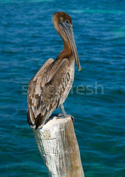 Karibik Strand Pol Mexiko Wasser Holz Stock foto © lunamarina