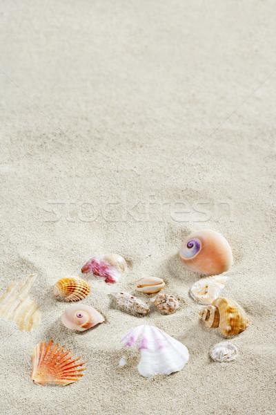 Foto stock: Caribbean · areia · da · praia · conchas · tropical · férias · de · verão · praia