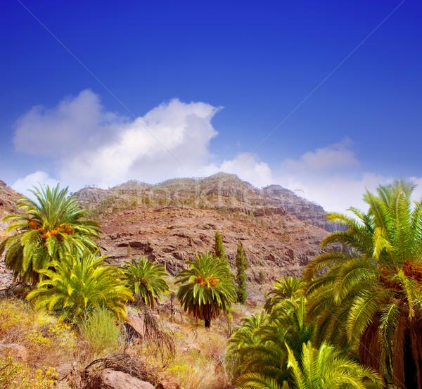 Kanarek palma góry feniks charakter Zdjęcia stock © lunamarina
