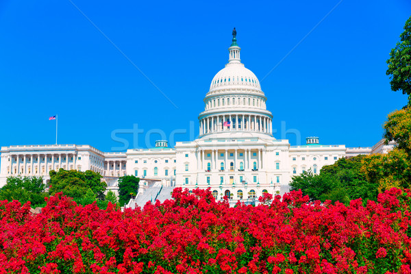 Capitol building Washington DC pink flowers USA Stock photo © lunamarina