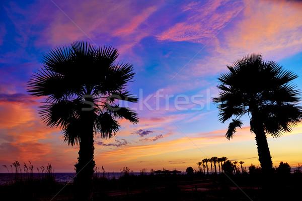 Almeria Cabo de Gata sunset pam trees Retamar Stock photo © lunamarina