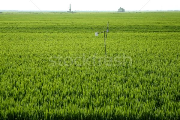 Rijstveld groene weide Spanje horizon perspectief Stockfoto © lunamarina