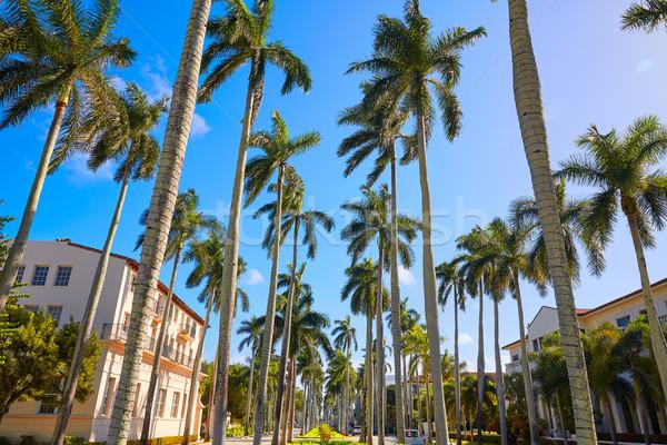 Palm plage royal façon Floride USA Photo stock © lunamarina