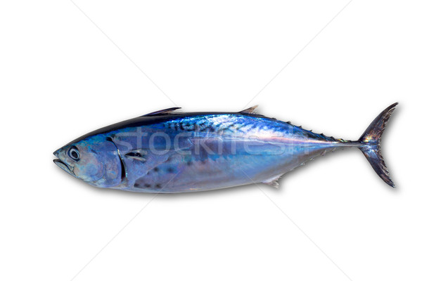 Little tunny tuna fish Euthynnus affinis on white Stock photo © lunamarina