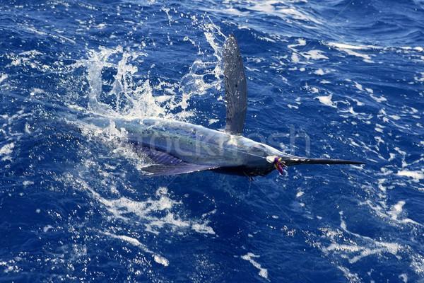 Stock photo: Atlantic white marlin big game sport fishing