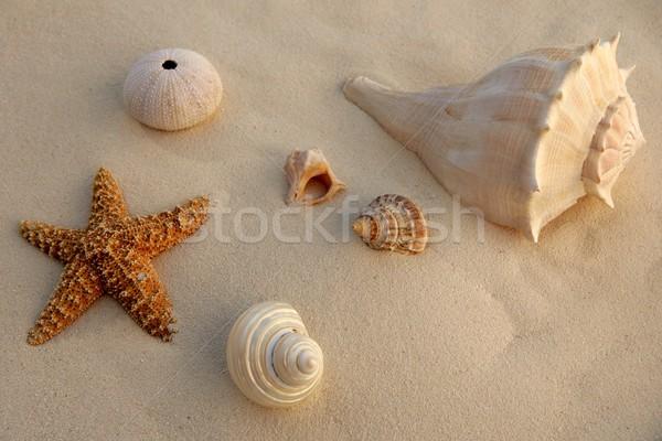 Карибы песчаный пляж морем снарядов Starfish текстуры Сток-фото © lunamarina