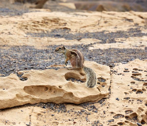 Esquilos canárias Espanha paisagem mar fundo Foto stock © lunamarina