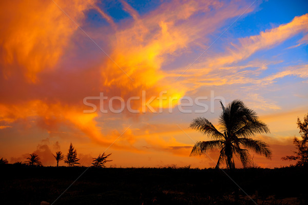 Sunset sky coconut palm trees in Caribbean Stock photo © lunamarina