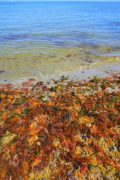 colorful yellow red seaweed sea algae Stock photo © lunamarina