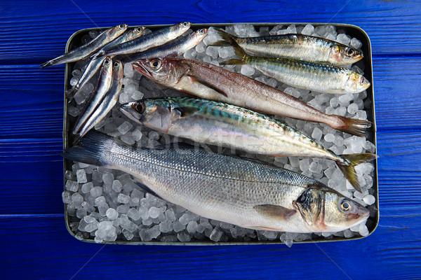 Vers vis makreel ijs Stockfoto © lunamarina