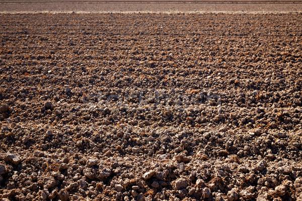 Rizs mezők aszalt mező Valencia Spanyolország Stock fotó © lunamarina