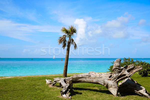 Key West beach fort Zachary Taylor Park Florida Stock photo © lunamarina