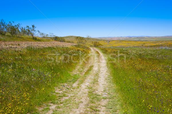 La sposób Hiszpania Santiago krajobraz zielone Zdjęcia stock © lunamarina