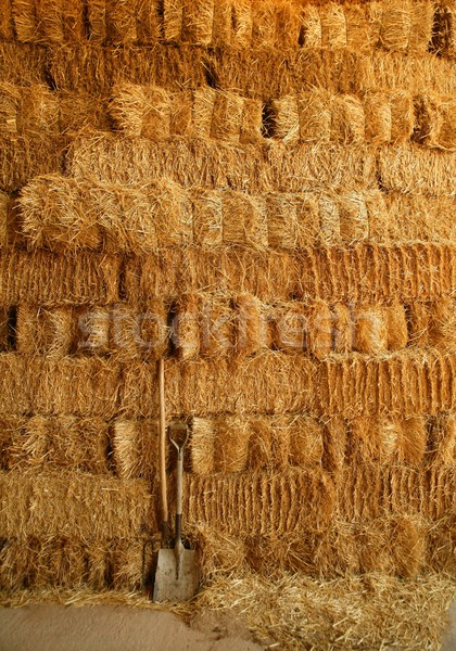 Dourado palha parede ferramentas como Foto stock © lunamarina