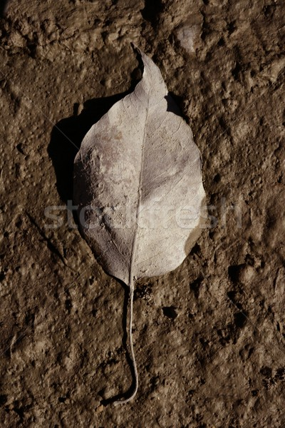 Foto stock: Um · folha · outono · tempo · marrom · argila