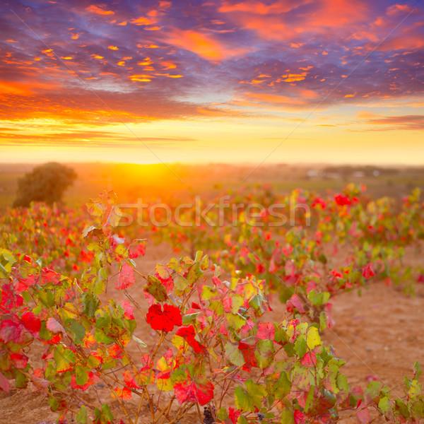 Stock fotó: ősz · arany · piros · naplemente · égbolt · étel