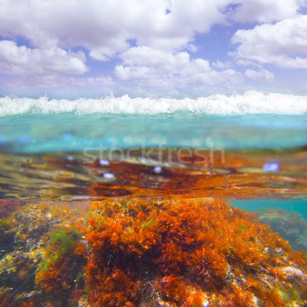 Mediterrán vízalatti hínár fű természet háttér Stock fotó © lunamarina