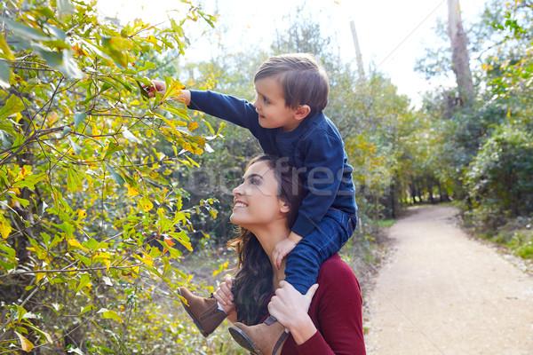 kid boy sit on mother shoulders picking leave Stock photo © lunamarina